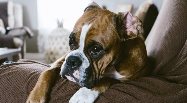 Gyomorforgató dologra kényszerítette kutyáját a perverz nő – 18+