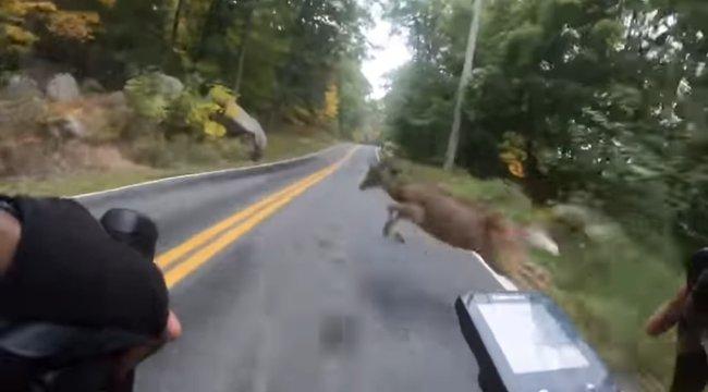 Még nézni is fáj: fejkamerával vette a biciklis, ahogy menet közben nekiugrik egy őz – videó