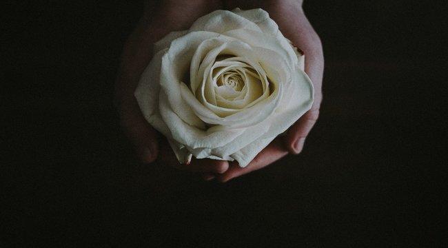 """""""Tanár vagyok"""" - Fehér rózsával gyászolnak a terrortámadásban elhunyt tanár kollégái"""
