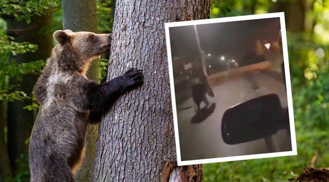Autóval üldözték a miskolci macit – mit tegyen, ha Ön is találkozik vele? videó