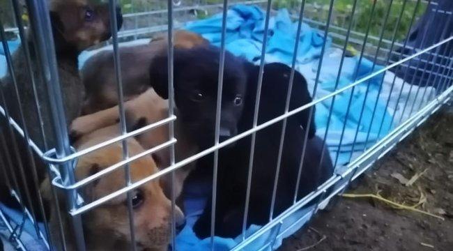 Betontömbök alá szorult kutyát mentettek Nagyvenyimben – fotók