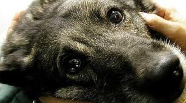 Kalapáccsal állt bosszút, szilánkosra törte kutyája koponyáját a fonyódi férfi
