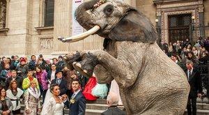 Kamionban dőltek ki a szadai szafaripark elpusztult elefántjai - Eszméletlenül találtak rájuk
