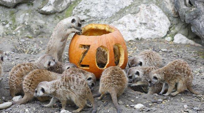 Halloween az állatkertben -Hé, haver, hagyjál nekem is!