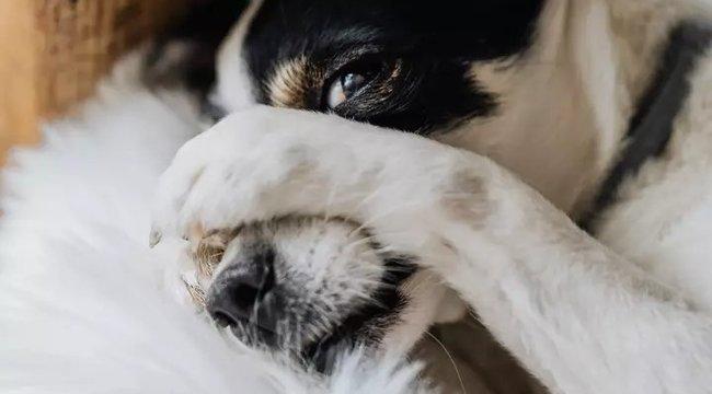 Sokkot kapott: Vagyonokat költött folyton fingó kutyájára, végül lebukott a valódi tettes