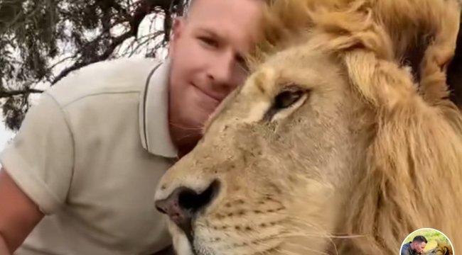 Látott már bújós kiscicaként viselkedő oroszlánt? - videó