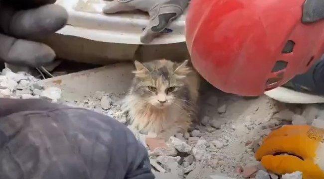 Négy nappal a törökországi földrengés után élve találtak egy macskát aromok alatt– videó
