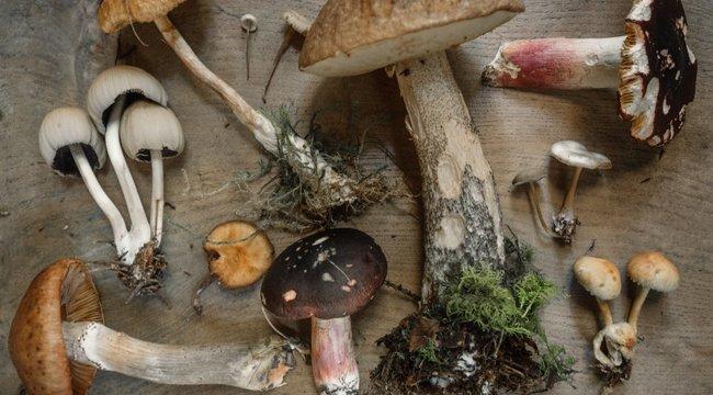 A gombát is gombával: megmutatjuk a legfinomabb őszi recepteket