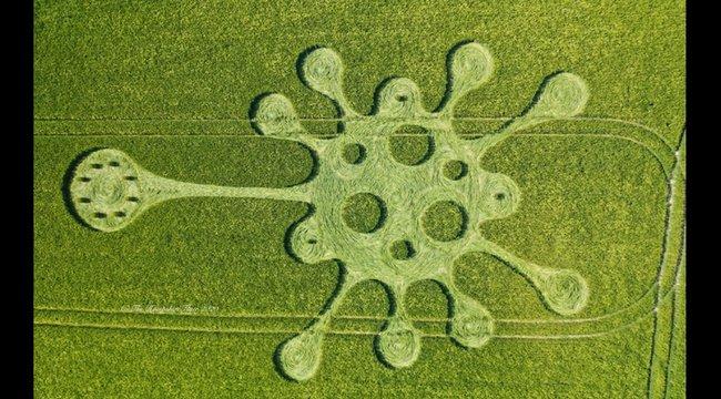 Koronavírus alakú gabonakör riogat Angliában
