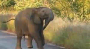 Táncoló talpak: Riszáló elefántbébin mosolyog az egész világ