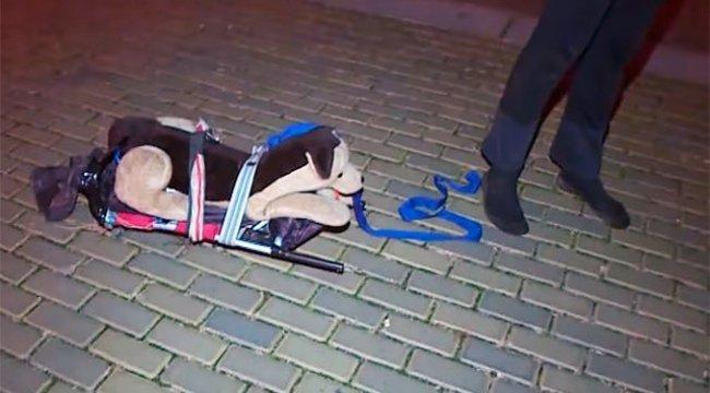 Plüsskutyával akarta kijátszani a kijárási tilalmat egy cseh férfi – videó