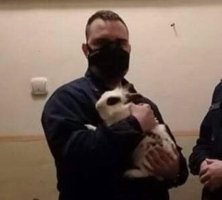 Még egy nyuszit sem hagynak cserben: fagyhaláltól mentették meg a budapesti zsaruk a kidobott, didergő tapsifülest