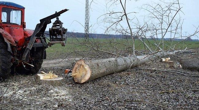 Horror: szabálytalanul kivágott két tonnás fa nyomta agyon a debreceni melóst - Helyszíni fotók