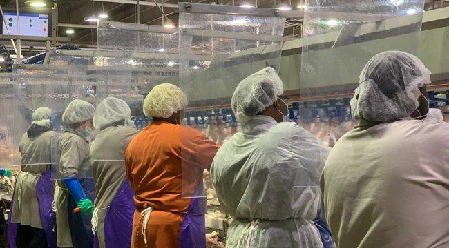 Embertelen körülmények: arra fogadtak a gócponttá vált húsüzem vezetői, hány dolgozójuk kapja el a koronavírust
