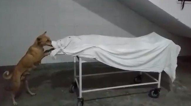 Döbbenet: kóbor kutya nyalogatta egy kislány őrizetlenül hagyott holttestét a halottasházban – 18+ videó