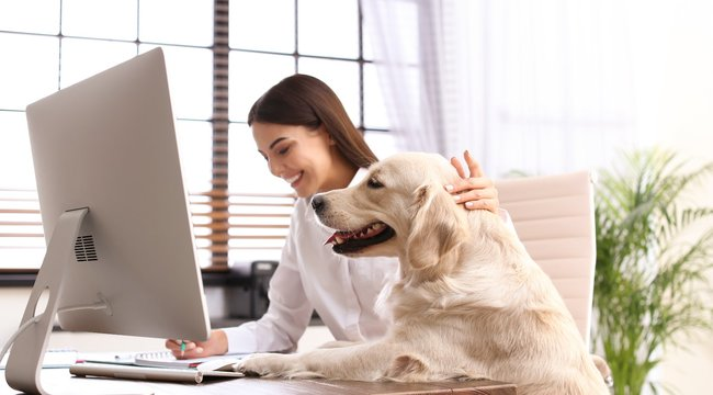 keresse meg az otthoni munkát