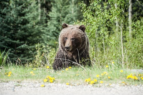 Hátborzongató pillanatok Egerben: Két medve figyelte a kutyáját sétáltató Borbálát