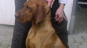 Hőkamera mentette meg Marci kutyát