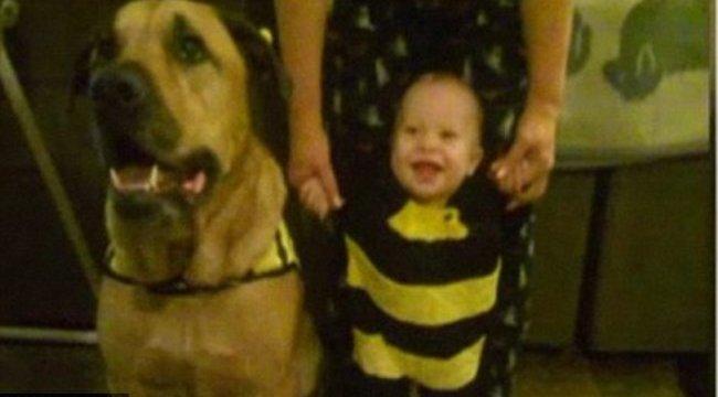 Szülinapján ölte meg a csecsemőt a kutya