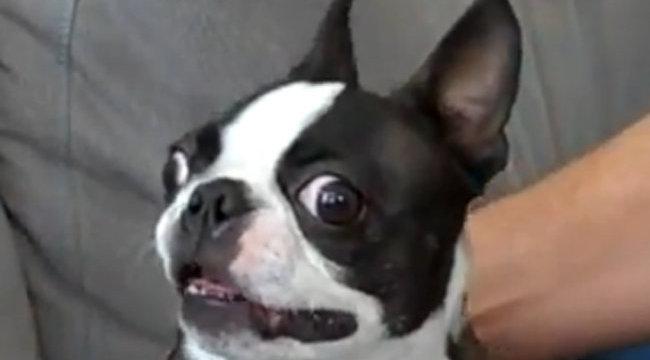 Tarol a neten a földönkívüli kutya - videó
