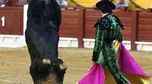 Fejre állt az idegtôl a bika