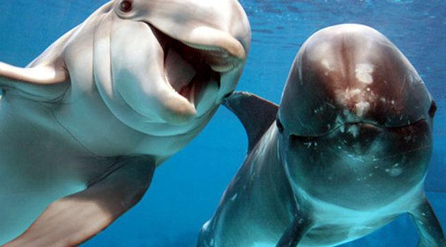 Közös génünk van a delfinekkel