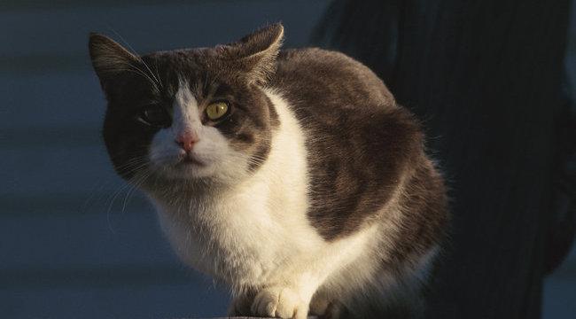 Kiugrott az  égő lakás emeletéről a cica