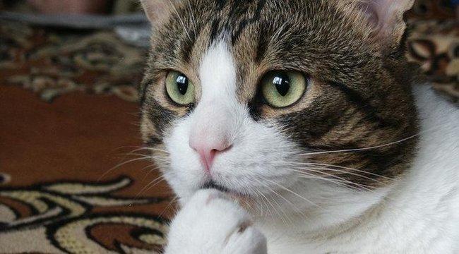 Cat Videó Fesztivál - vicces cicákról