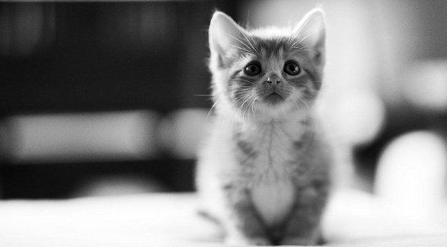 Napi cuki: 6 hetes cica egy dobermann szájában - videó