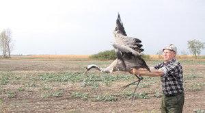 Lenyűgözte a finnt az óriási magyar madár