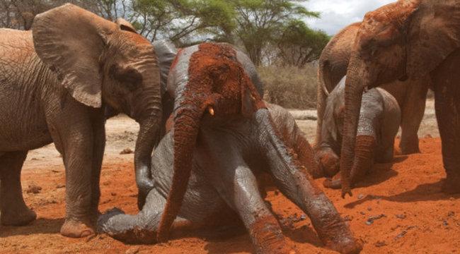 Részeg elefánthorda tombolt Indiában