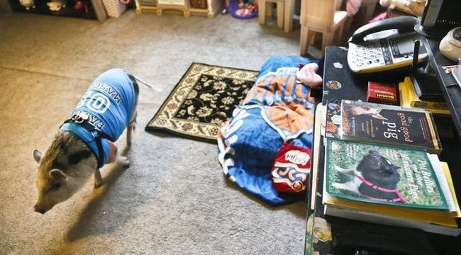 Tiltott háziállatuk miatt lakoltatták ki a családot