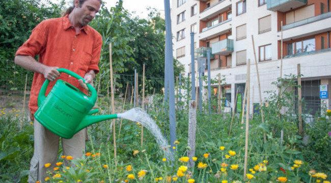 Zöldséget termelnek a főváros közepén