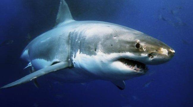 Sokkoló: emberevő cápával együtt fotózta le saját fiát