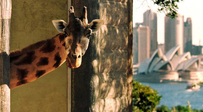 Őrület: sátorozni lehet az állatkert közepén