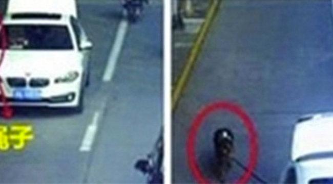 Durva: autóból sétáltat kutyát a lusta milliomos
