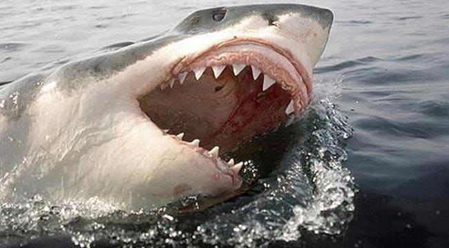 Rejtélyes tengeri szörny falt fel egy nagy fehér cápát