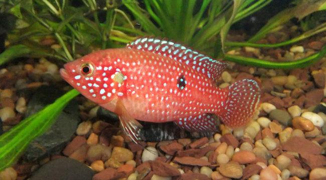 Afrikai halat találtak a Hévízi-tóban