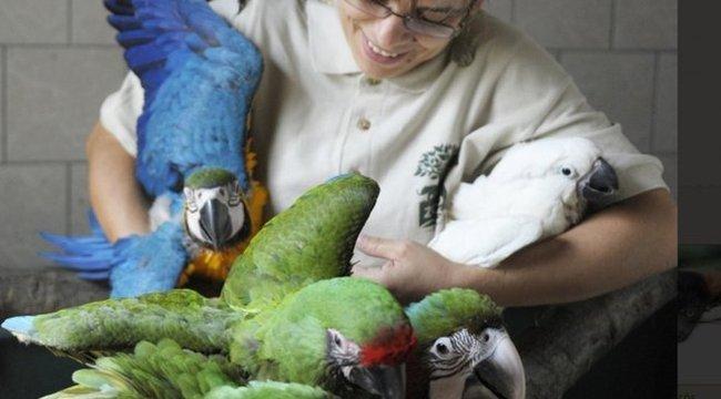 Papagájoknak nyitottak ovit Nyíregyházán