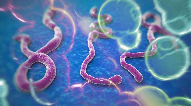 Ebola: fertőzésgyanús egy román férfi