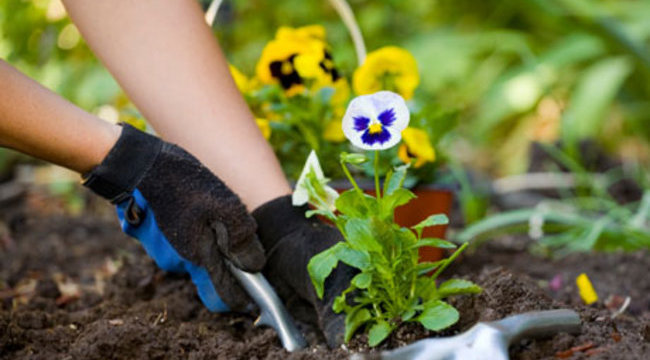 Félelmetes dolgot talált kertészkedés közben a nő