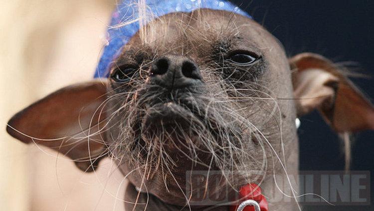 A világ legrondább kutyái versenyeztek