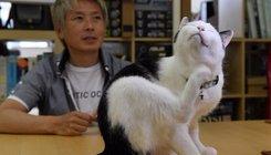 Macskákkal csökkentik a streszt Tokyoban