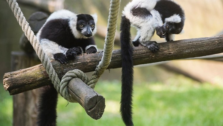 Varikölyök a Nyíregyházi Állatparkban