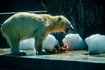 Ugye milyen jó jegesmedvének lenni?
