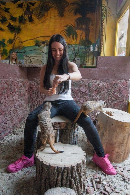 Veszélyes állatok telepedtek a Bors csinos kolléganőjére