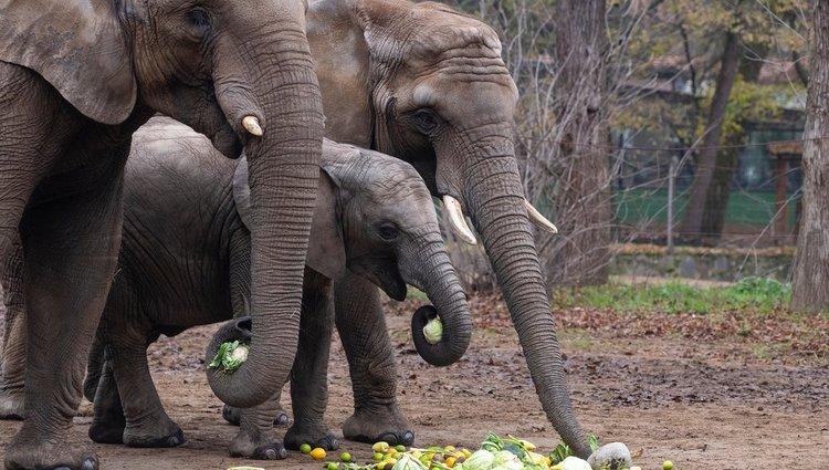 Hétköznapok a Nyíregyházi Állatparkban