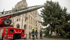 Felállították az ország karácsonyfáját a Kossuth téren